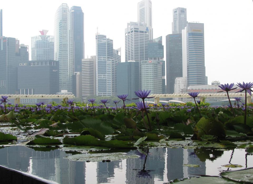 Asurequality bureau veritas partnership targets se asia export